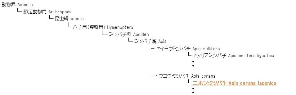 日本みつばち 系統