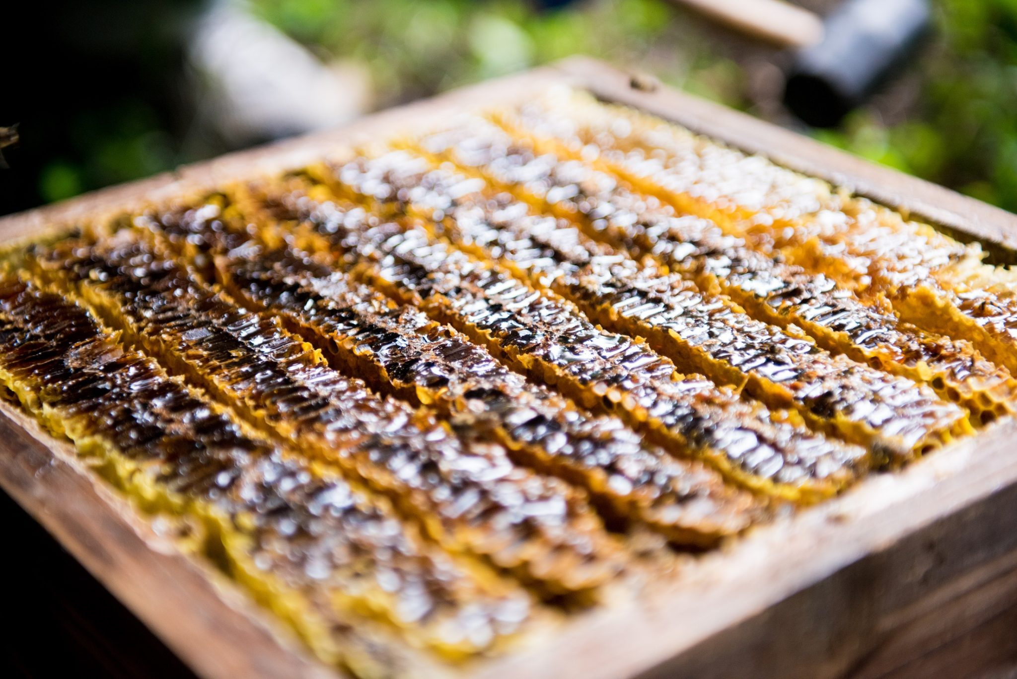 日本みつばち蜂蜜